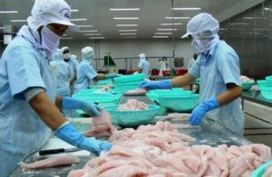 PANGASIUS EXPORT IN 2017 REACHED 1.78 USD