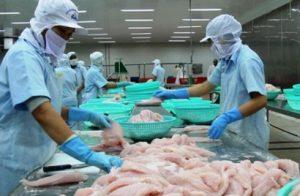Xuất khẩu cá tra năm 2017 đạt 1,78 tỷ USD