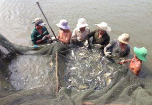 Vietnam seafood in 2019 builds export target of 10 billion USD