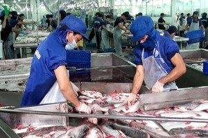 Vietnamese pangasius successfully conquered the Japanese market