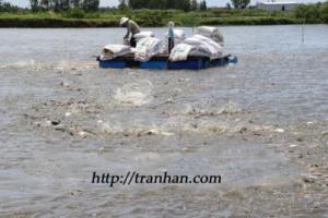 (Tiếng Việt) Cá tra Việt đi trước, đón đầu