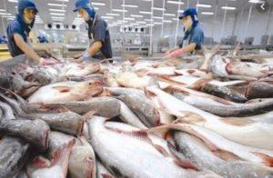 (Tiếng Việt) Ngành xuất khẩu cá tra đặt kỳ vọng lớn năm 2019